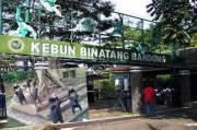 Bandung Zoo Poor Management, Emil Disappointed