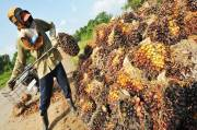 Watch Out Black Campaign for Indonesian Palm Oil Industry