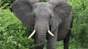 No elephants poached in a year at Mozambiques Niassa wildlife park