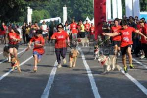 Purina Alpo Dog Run 2015