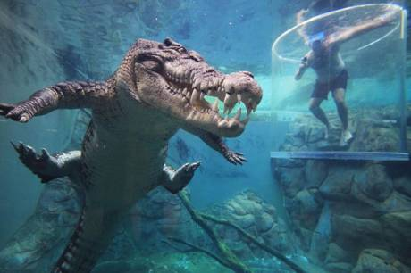 Test Your Adrenaline in 16 Foot Crocodile Tourist Attraction