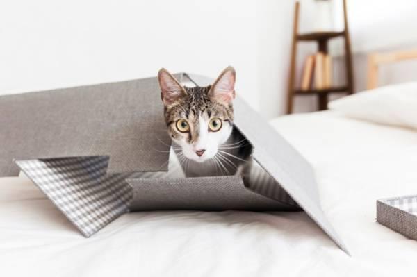 Kucing Kamu Hamil? Ini Perawatan yang Mesti Dilakukan