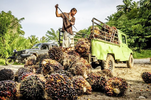Merauke Palm Plantation Can be First Role Model