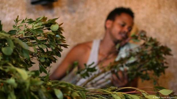 Khat is big business in Ethiopia