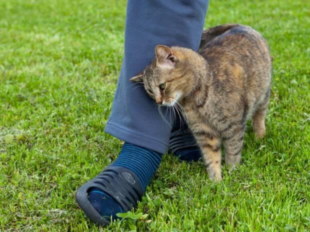 Kamu Harus Peka Kalau Kucing Kasih 6 Kode Penting Ini