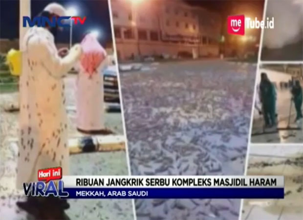 I News Streaming: VIDEO: Ribuan Serangga Muncul Di Komplek Masjidil