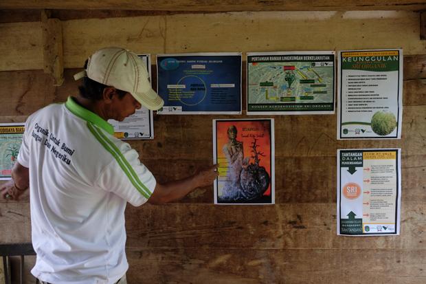 Cerita Foto: Padi SRI Organik, Hentikan Kutukan Gagal Panen
